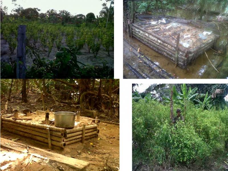 Ej�rcito desmantela seis campamentos guerrilleros de las Farc y destruye 25 mil matas de coca